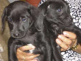 20070530212426-cachorras.jpg