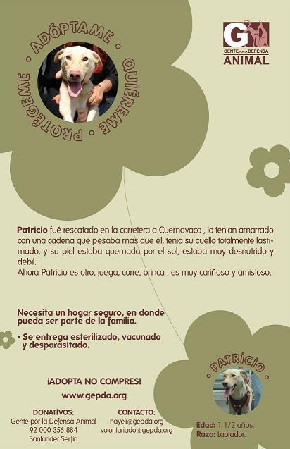 20070626164643-f-patricio.jpg