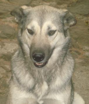 """""""Lobita"""", hermosa y juguetona perra"""