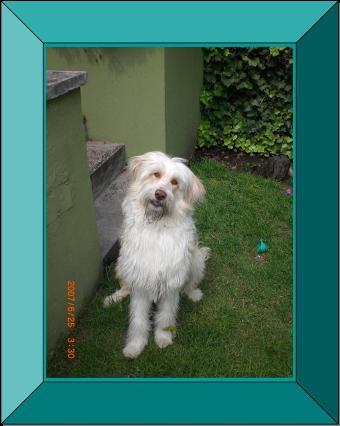 """""""Doggie"""", obediente y tranquilo perro"""