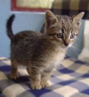 """""""Wagner"""", tierno y pequeño gatito"""
