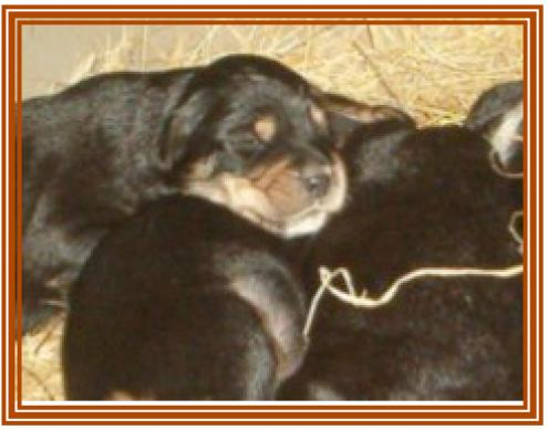 11 cachorritos en adopción