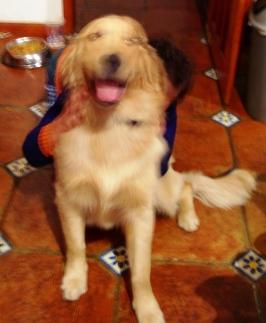 """""""Jack"""", activo y cariñoso perro"""