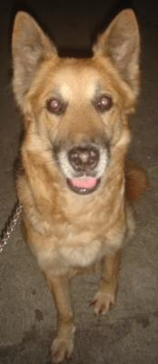 """""""Lola"""", perra limpia, obediente y buena guardiana."""
