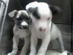 Cachorritas en adopción