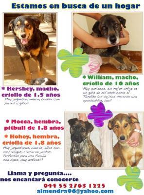 Perros sin hogar buscan familia