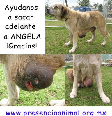 Angela requiere atención médica y/o donativos