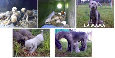 11 cachorros necesitan hogar urgente