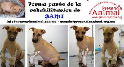 """""""Sami"""", hermosa cachorra requiere ayuda médica..."""